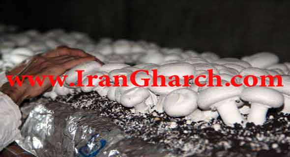 http://www.irangharch.com/img/compost.jpg